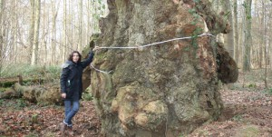 Measuring an ancient oak in Sherborne Park by Hannah Solloway