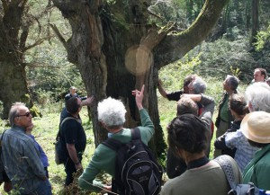 atf-ancient-tree-visit-plymton
