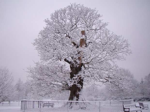 Hampstead Heath bandstand oak