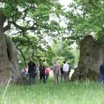 Ickworth oaks by Brian Muelaner