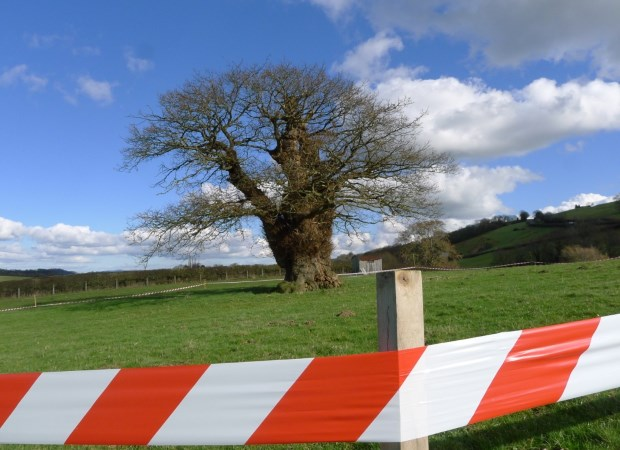 By Rob McBride, treehunter.co.uk