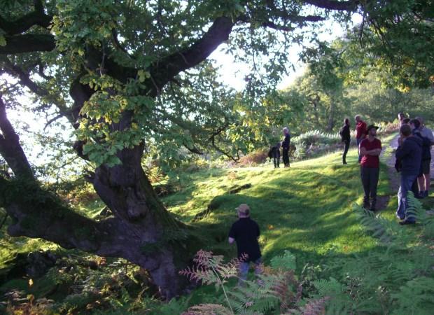 Rydal veteran tree training cropped