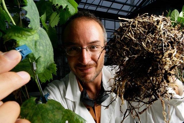 Stefano Mancuso plant neurologist