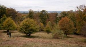 Epping view in autumn colours by Jeremy Dagley for website