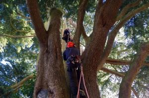 vet-tree-work-by-reg-harris-cropped