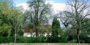 veteran-trees-in-garden-by-paul-read