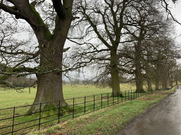 Stanway Park avenue of trees (photo credit: Tom Hamments)